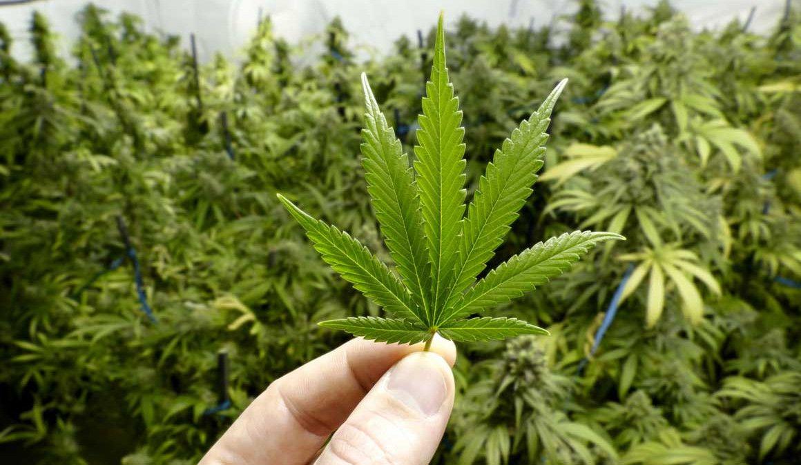 ¿Será el cannabis el próximo suplemento para corredores?