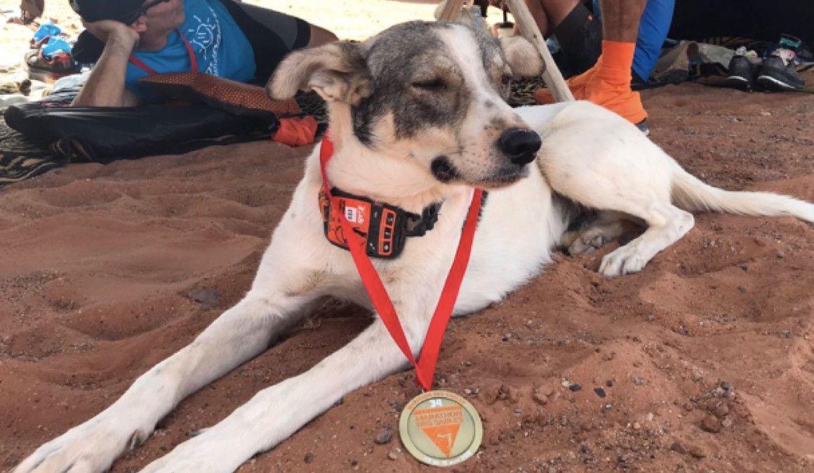 Un perro finaliza el Marathon des Sables