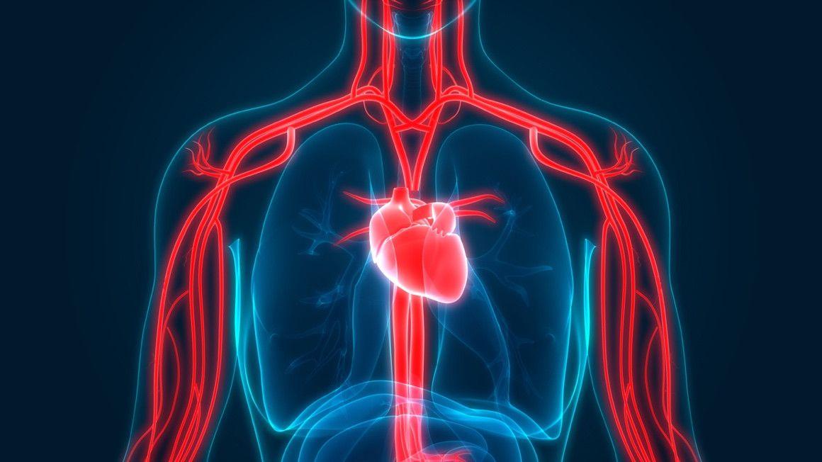 Circulación sanguínea: 4 ejercicios que pueden ayudar a estimularla