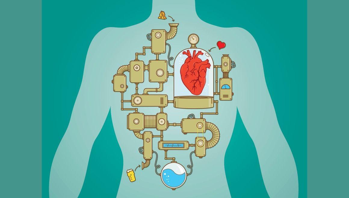 Cómo cuidar tus 6 órganos vitales para correr mejor